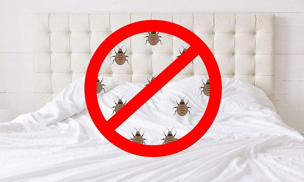 Covington Bed Bug Killer vs EcoRaider Bed Bug Killer